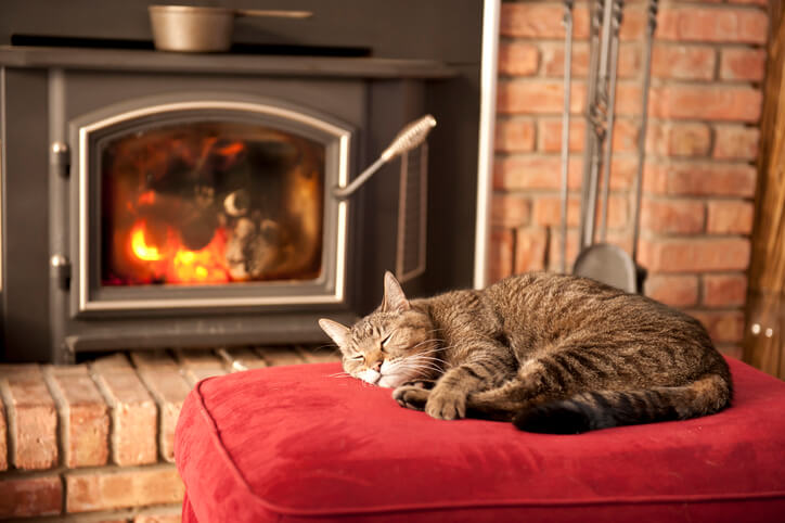 Cat By Fireplace